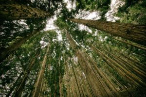 Holzinvestment als Kapitalanlage